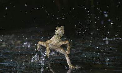 размножение ящериц