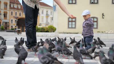 Где голуби прячут птенцов своих?
