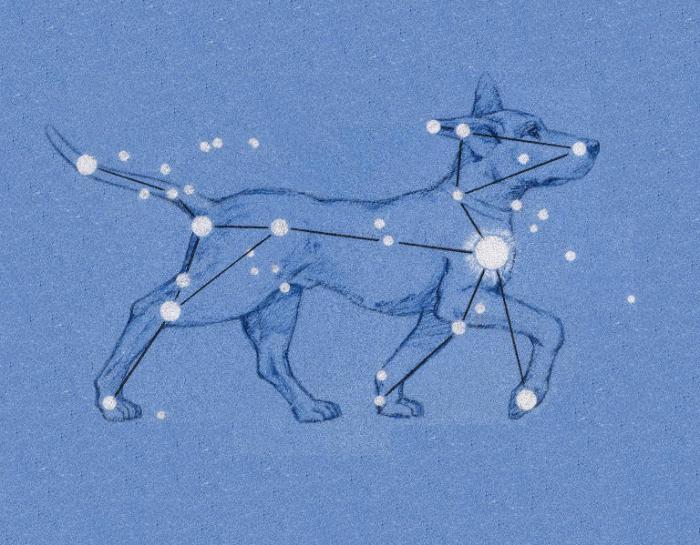 фото созвездия большой пёс