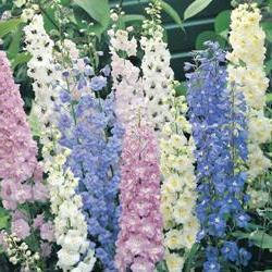 Цветы сибири