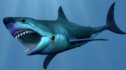 касатки акулы фото