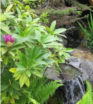 Клипарты png на прозрачном фоне цветы