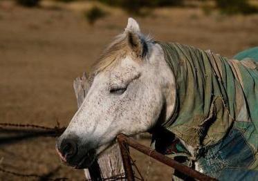 лошади спят стоя