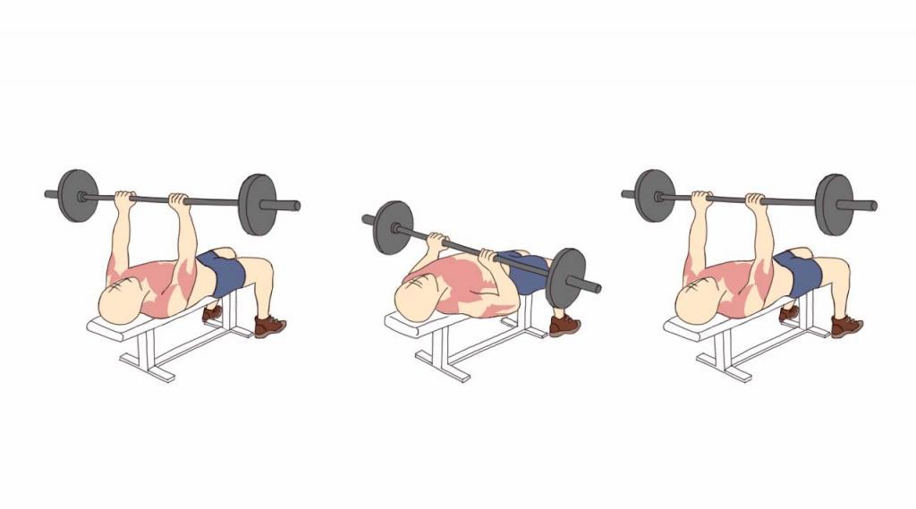 bench press lying on a horizontal bench