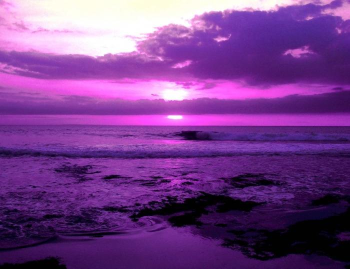 фиолетовый цвет фото картинки