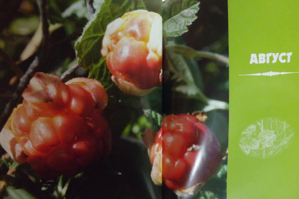 We will sculpt cloudberries!