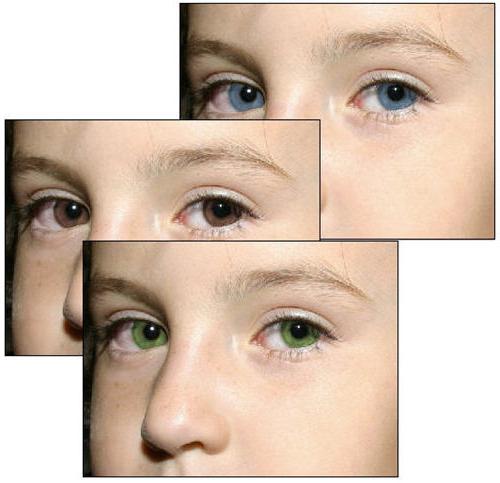 Хамелеон цвет глаз у человека