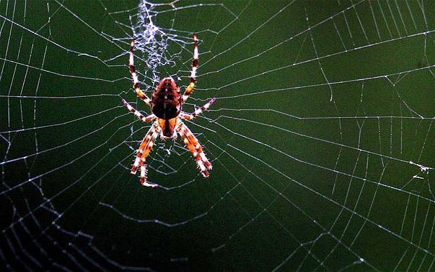 к чему снятся пауки и паутина