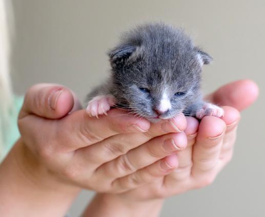 К чему снится кот нагадил на пол - Сонник Азара