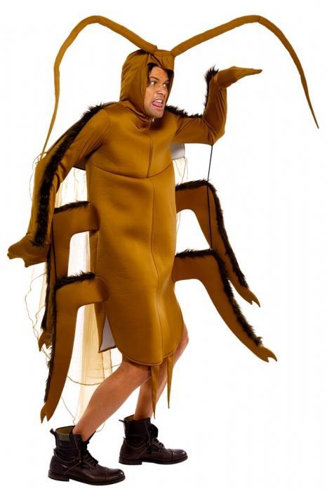 сонник тараканы рыжие
