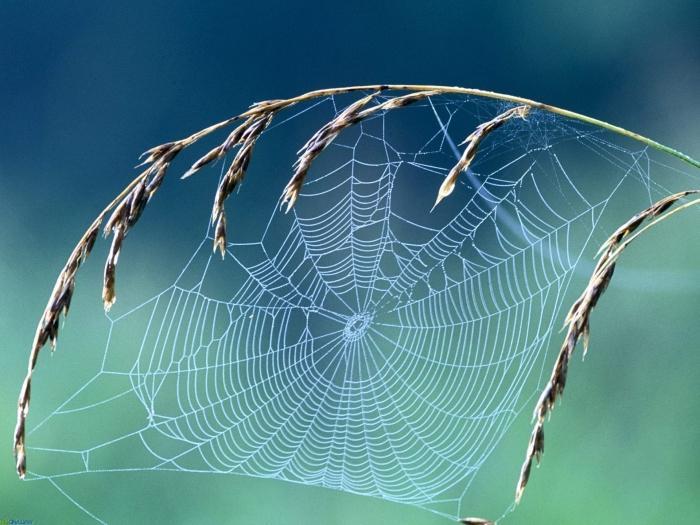 к чему снится много паутины