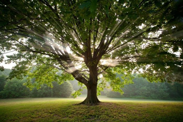 К чему снится Дерево толкование по 100 авторам
