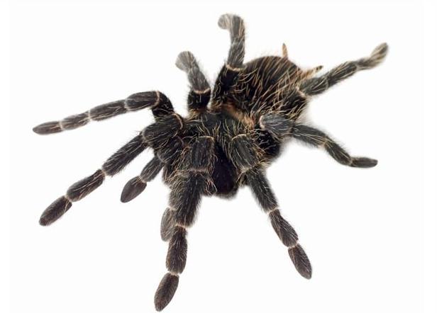 снился паук к чему