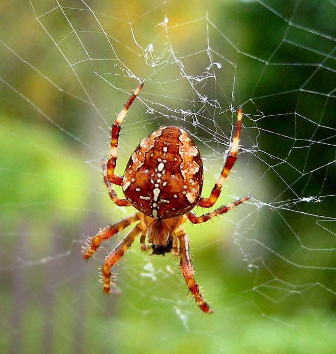 к чему снятся маленькие пауки