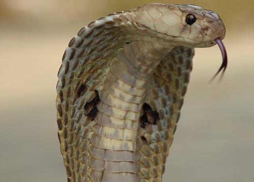 сон маленькая змея