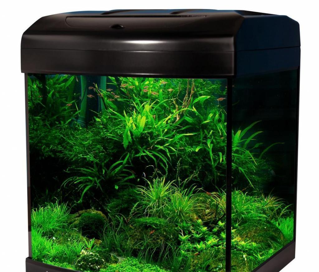сожалению, картинки растения для аквариумов доказано