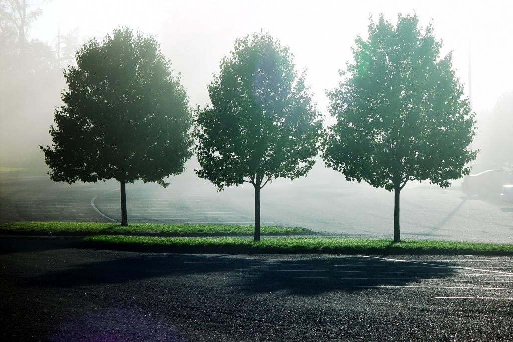 Картинка ряд деревьев