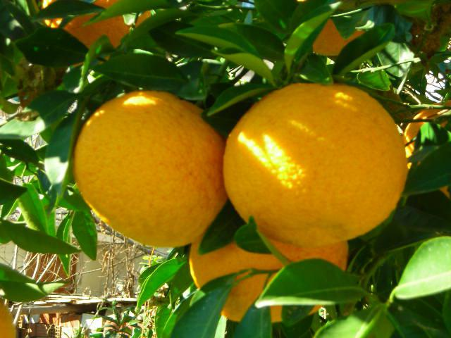 Почему тошнит от грейпфрута thumbnail