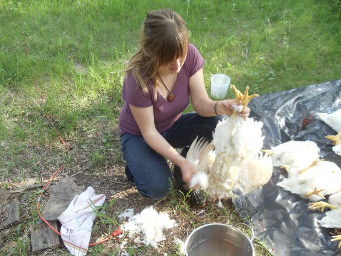 как ощипывать кур