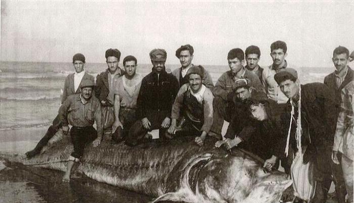 рыбалка на волге в 1924 году