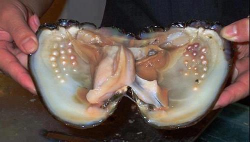 Значение моллюсков как в природе так