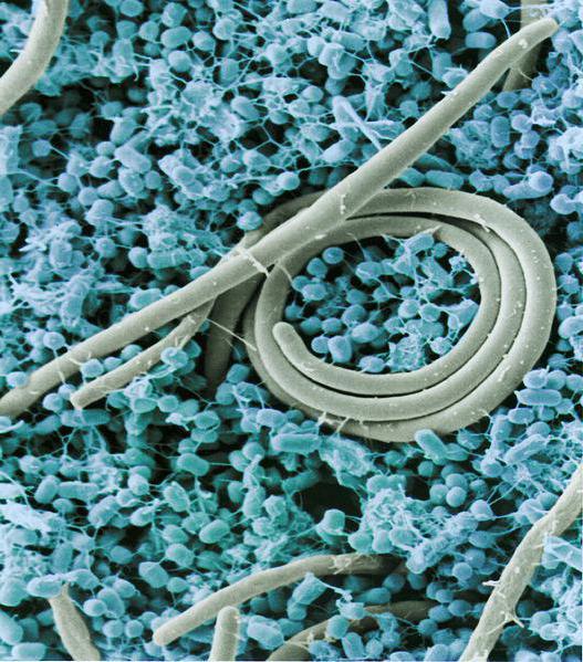 таблетки от простейших паразитов