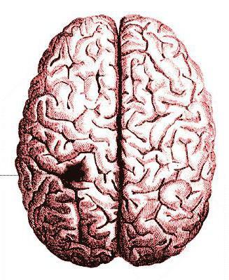 предвестники ишемического инсульта головного мозга