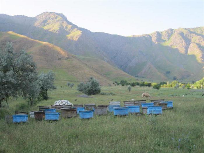 мед степной полезные свойства