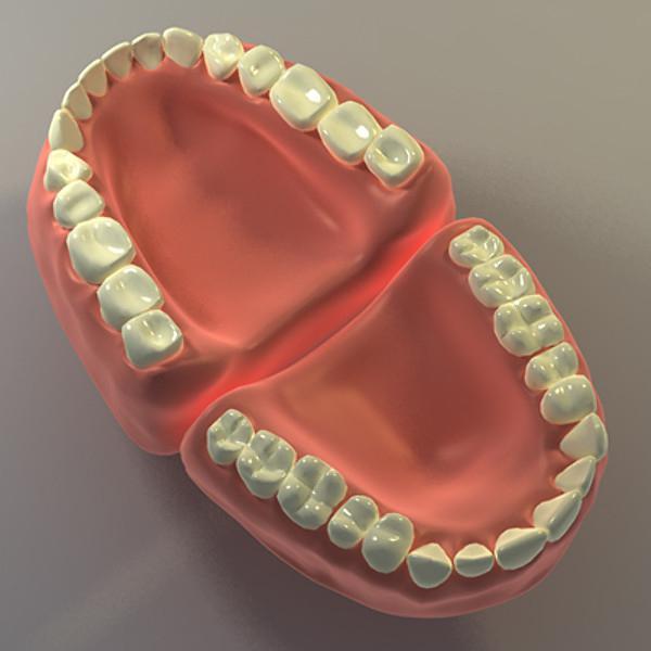 сколько зубов меняется у человека