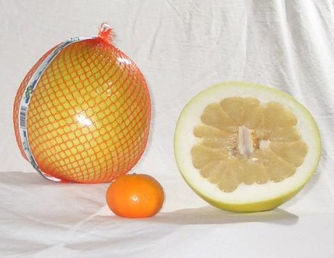 Что за фрукт помело? Свойства фрукта помело