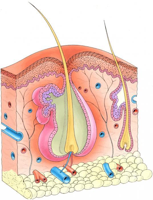 Медикаменты для лечения тромбофлебита
