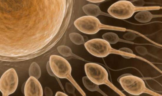 донорство спермы цена
