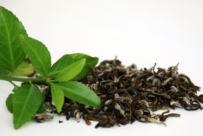 зеленый чай польза и вред для похудения