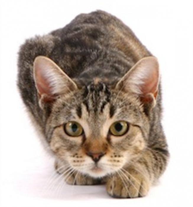 К чему снится котенок который нагадил