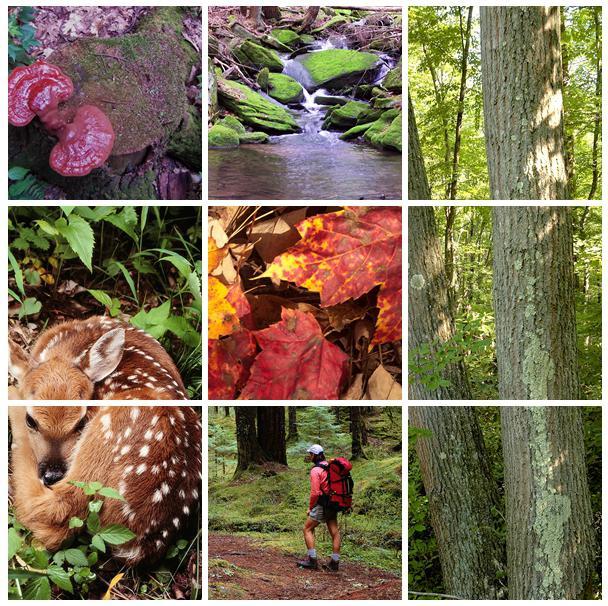 Фото связанные в лесу 22 фотография