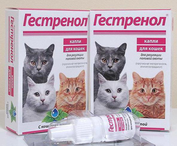 Что давать кошке при течке: уколы, капли. Как помочь кошке ...