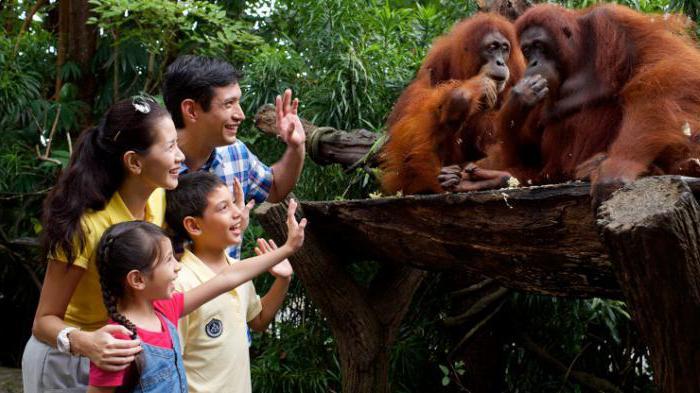самые посещаемые зоопарки