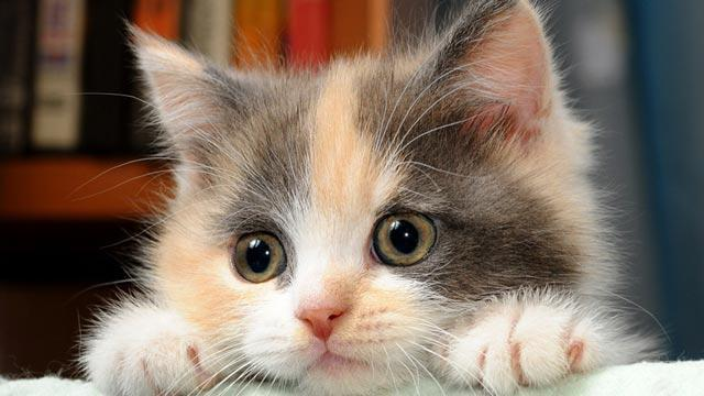 пробиотики для кошек