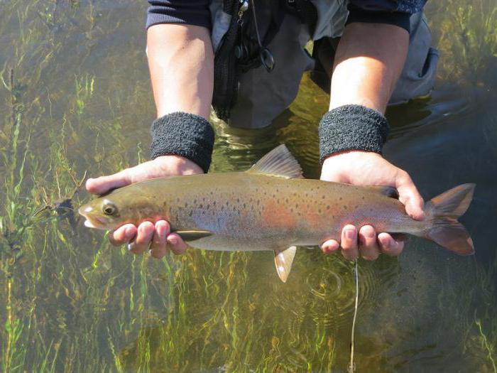 байкальский заповедник рыбы