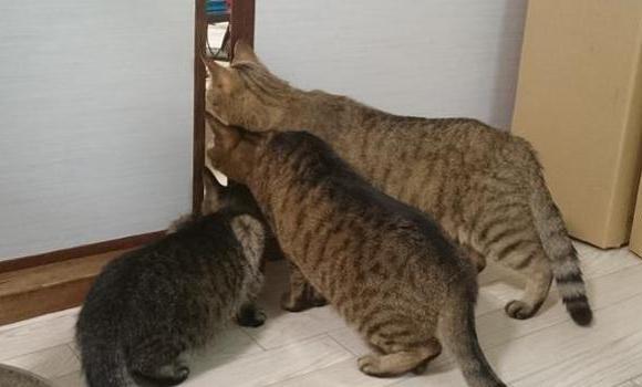 почему кошки так боятся пылесоса