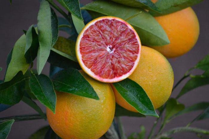 апельсин дерево