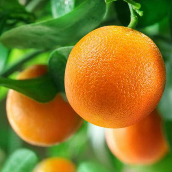 как вырастить красный апельсин из косточки