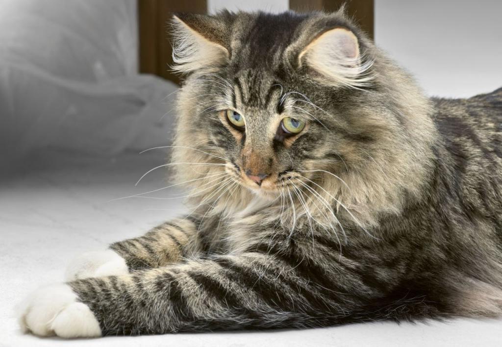 норвежская лесная порода кошек фото и описание держится воздухе при