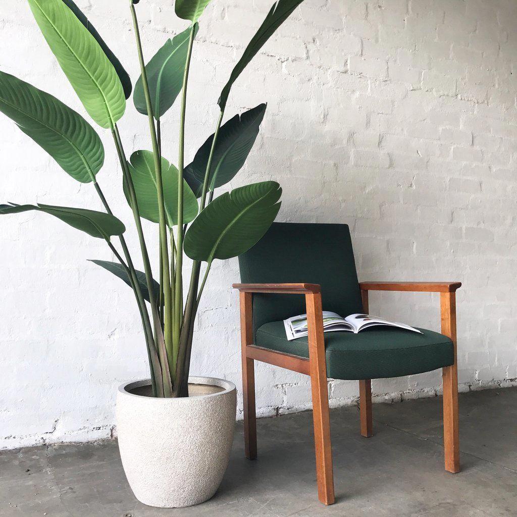 красила внутрит большие офисные растения фото и названия застилаем