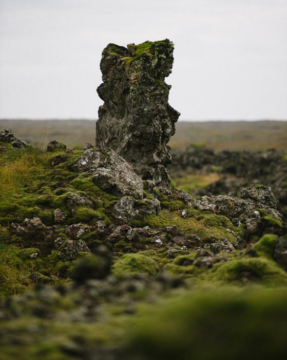как заваривать исландский мох от кашля