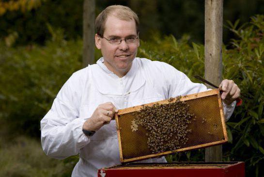 Виды пчел