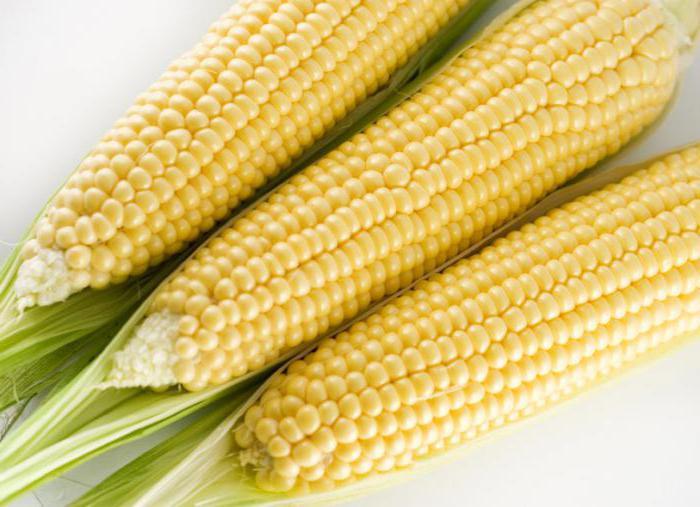 кукуруза кубанская сахарная