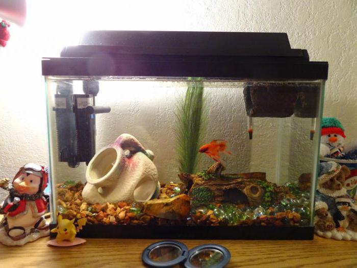 плавниковая гниль у золотых рыбок