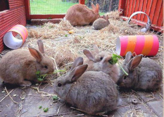 Как сделать клетки в домашних условиях для кроликов