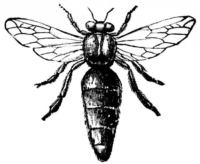 Королева улья - пчелиная матка